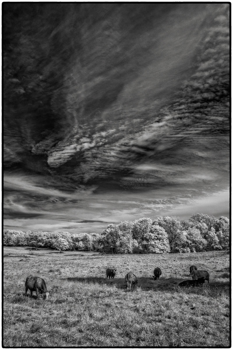 Bw infrared